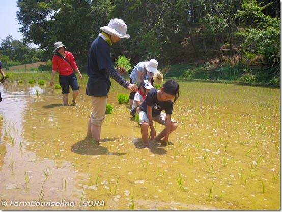 田植えと麦の収穫の季節