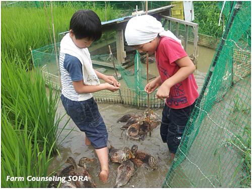 米作り日記 15