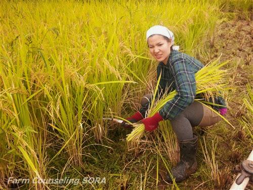 米作り日記 25