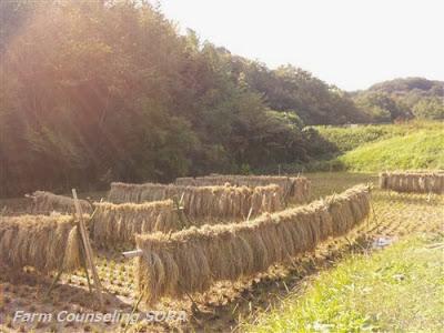 米作り日記 27