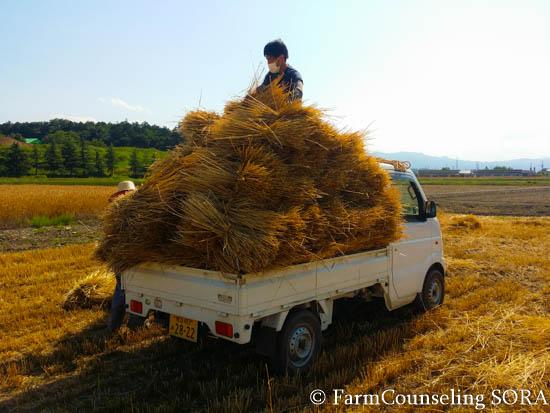 田んぼの準備と麦わら集め